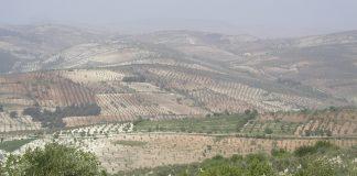 جبال و زيتون عفرين. ويكيبيديا.